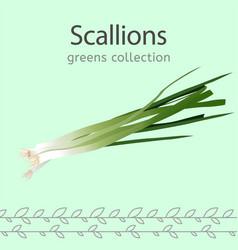 Scallions image vector