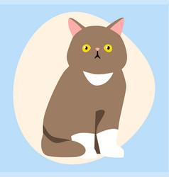 cat breed cute pet brown fluffy young adorable vector image vector image