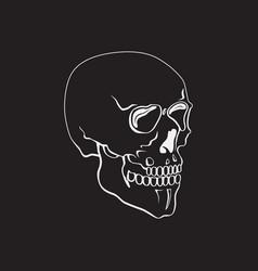 hand drawn skull or symbol vector image vector image
