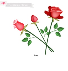 Rose Flowers The Popular Flower of Georgia vector image vector image