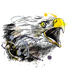 Colored hand sketch head bald eagles vector image