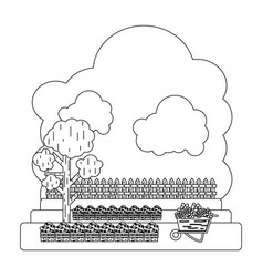 line cultivated with tree and wood grillage farm vector image