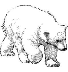 Polar bear cub vector