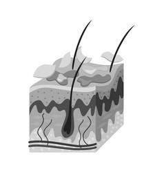 Design skin and epidermis sign set vector