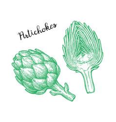 Ink sketch of artichokes vector