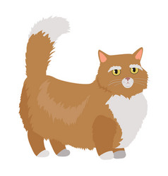 munchkin cat flat design vector image