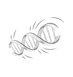 realistic dna helix molecule with genes vector image