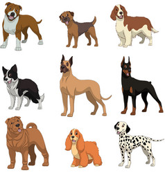 Set purebred dogs vector