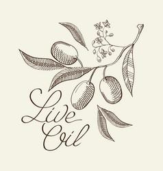 Twig olive decorative sketch vector