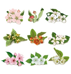 set of flowers on fruit trees vector image vector image