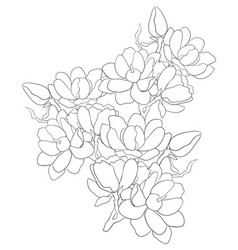 Adult coloring bookpage a cute brunch of flowers vector