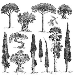 big set of engraved hand drawn trees include pine vector image vector image