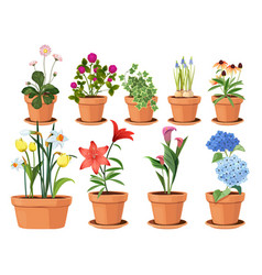 flowers pot nature cartoon of vector image
