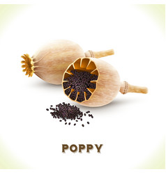 Poppy seed isolated on white vector