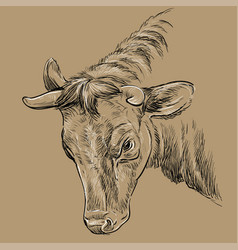 Portrait angry bull hand drawing brown vector