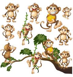 Wild monkeys in different actions vector