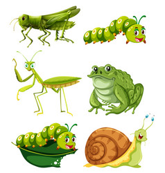 different types of insects in green color vector image