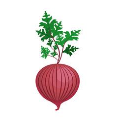 fresh onion with plant organ food vector image