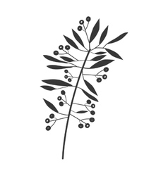 Gray scale branch olive with leaves and fruits vector