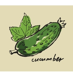 hand drawn cucumber vector image