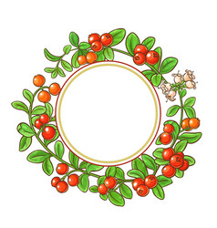 Cranberry branch frame vector