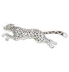 Running cheetah or leopard animal in motion vector
