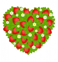 strawberry heart vector image