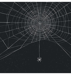 Halloween background with spider and web vector