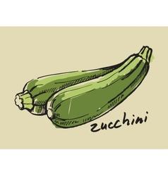 Hand drawn zucchini vector