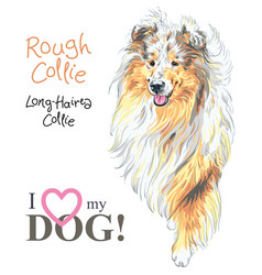 Dog rough collie breed vector