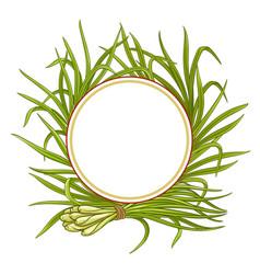 lemongrass plant frame vector image