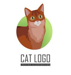 Somali cat flat design vector