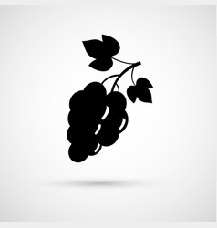 Vine grape with leafs vector