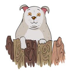 cartoon image of dog vector image