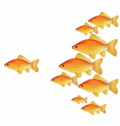 gold fishes vector image vector image