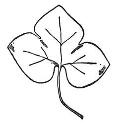 Leaf of liverwort have simple three corner leave vector