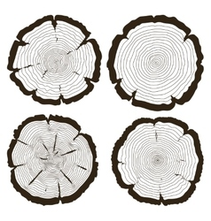 Tree rings and saw cut trunk set vector