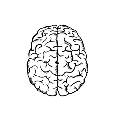 Human brain sketch in ouline style vector image vector image