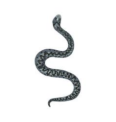 fairy snake isolated on white background vector image