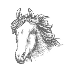 Horse head sketch of arabian mare vector image