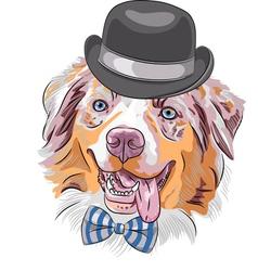 hipster dog Red Australian Shepherd breed vector image
