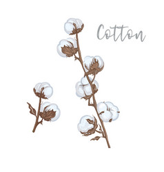 cotton branches hand drawn vector image
