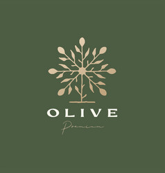 olive tree sophisticated aesthetic logo icon vector image