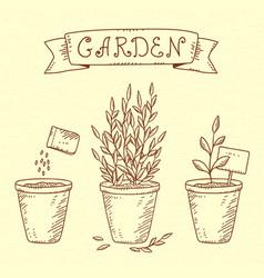 plants in pots vector image vector image