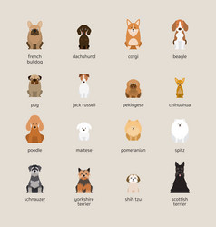 dog breeds set small and medium size vector image