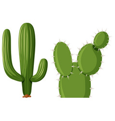 Two types of cactus plant vector