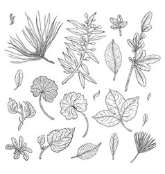types of leaf outline leaves of different types vector image