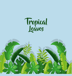 tropical leaves border card decoration with shadow vector image vector image