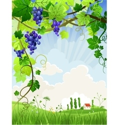 Beautiful landscape with a vineyard vector