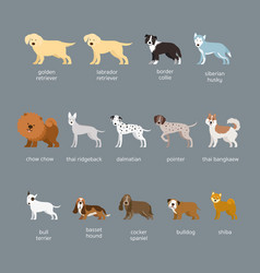 dog breeds set large and medium size vector image